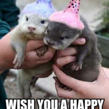 328919-Thought-I-Otter-Wish-You-A-Happy-Birthday
